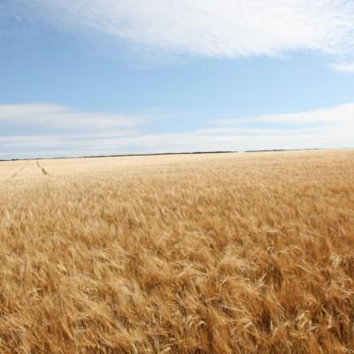 害虫駆除から自動運行による農薬散布…農業用ドローンについて調べると最新の農業が分かる☆