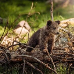 クマの捜索はドローンで決まり!未然に防げる熊被害