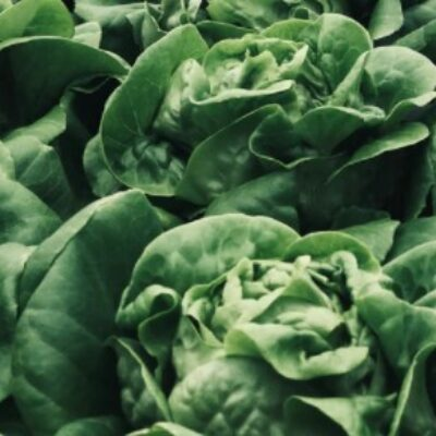 ドローンで収穫計測!スマート農業の進化!