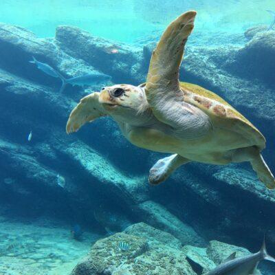 ドローンで捗る自然調査!ウミガメの産卵を上空から発見!!