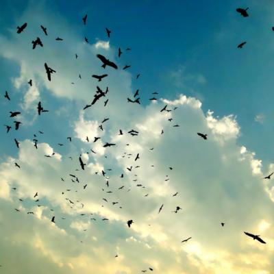 鳥害はドローンで!岩手県農業研究センターが実現するスマート農業